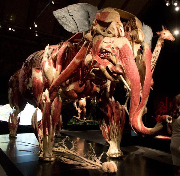 D Exhibition London : This is what a skinless elephant and shark made out of