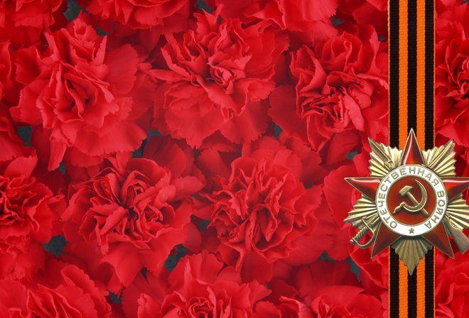 Красные цветы, отечественная война, гвоздики, фон, звезда