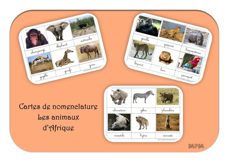 Cartes de nomenclature - Animaux d'Afrique