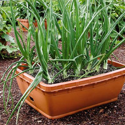 357 best Container Gardening images on Pinterest