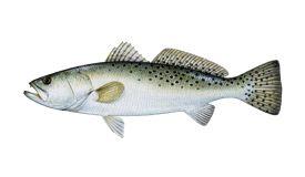 Top 10 Crystal River, FL Fishing Charters 2018 - FishingBooker