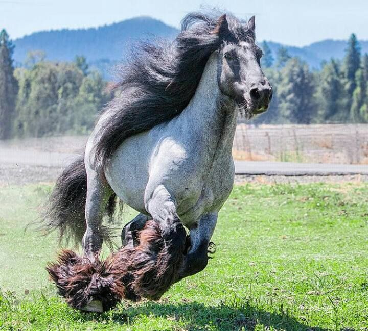 It kinda looks like it's  wearing cheerleader pom- poms on its fetlocks.