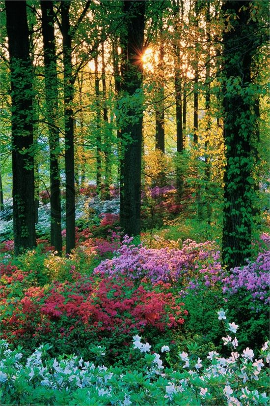 Stunning Nature Photography Collection (10 Pictures) the different colours of the flowers and trees with the sunlight are good for showing sight. touch could be represented by close up photos of leaves, petals or bark to show the texture.