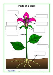 Parts of a plant and flower posters/worksheets