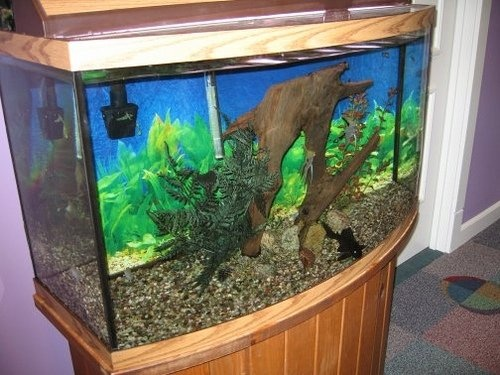Our library fish live on the Lower Level, just at the entrance to the children's area.