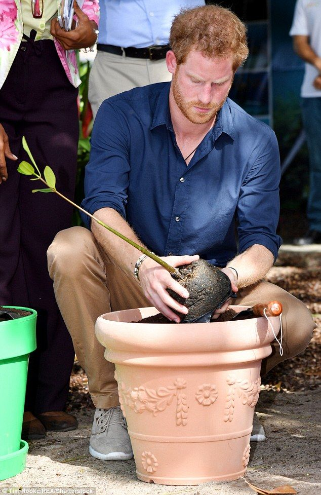 The Prince isn't afraid to get his hands dirty and crouches down to do some planting...