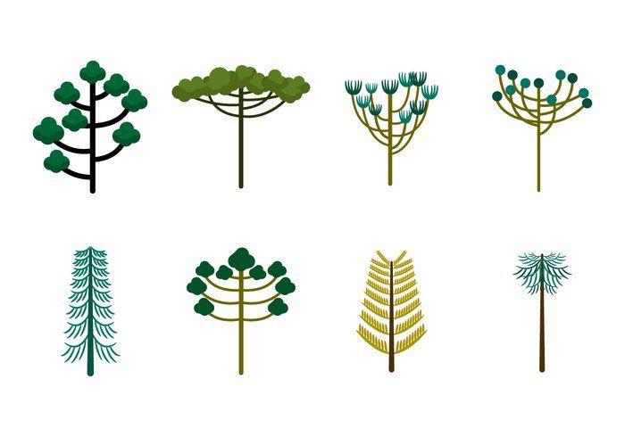Free Vector Araucaria Árvores