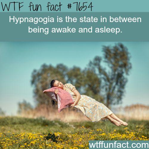 Hypnagogia - WTF fun facts