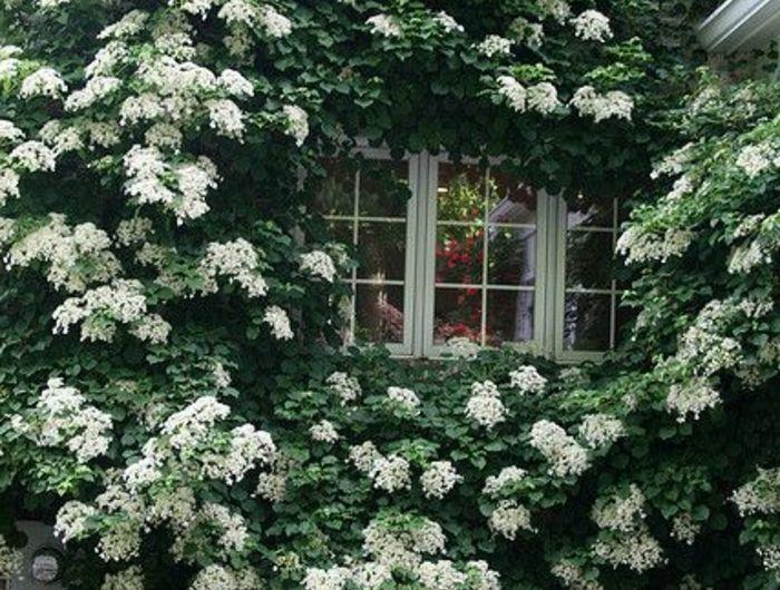 25 plante grimpante for Plantes et jardin exterieur
