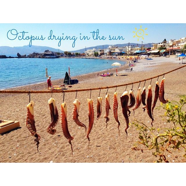 Octopus drying in the sun in Haraki Rhodes Greece olivefetaandouzo's photo on Instagram