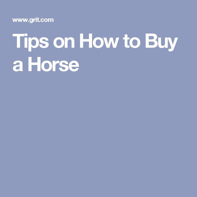 Tips on How to Buy a Horse