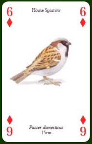 Heritage Garden Birds playing cards Garden Birds Ref 1010 Beautiful illustrations of most of the birds commonly seen in gardens, and a few of the more unusual visitors! Excellent quality coated playing cards with a wide variety of themes. Each deck includes usual 52 cards plus 2 jokers.
