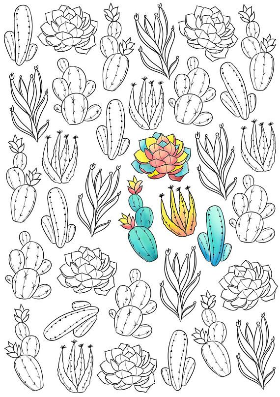 Adult Coloring Page Succulent Coloring Page Cactus