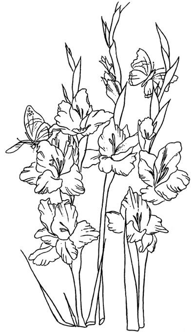 clip art of gladiolus flowers done in black and white line