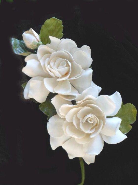 Gardenias <3