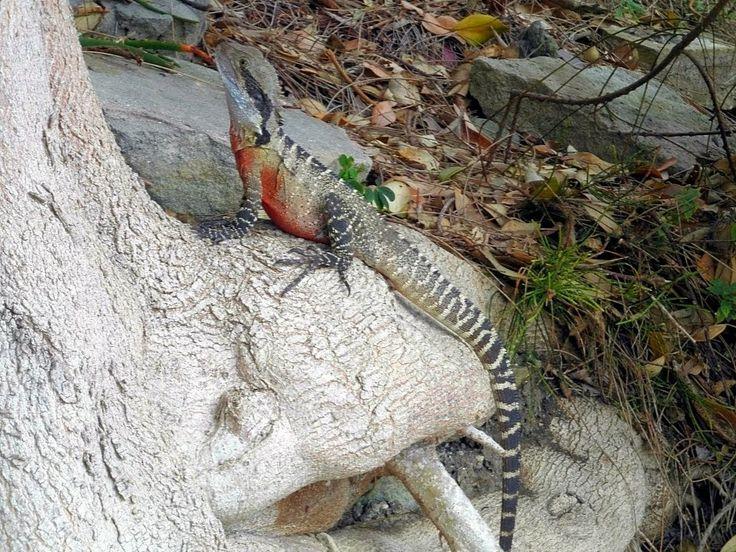 Wayer Dragon