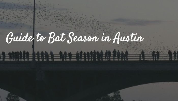 Guide to Bat Season in Austin (March to October)