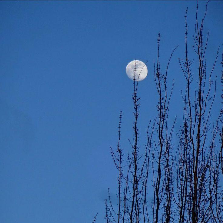Goodnight Portland... #iphoneonly #moon #earlymoon #blueskymoon #pnw #pnwisbeautiful #forestheights #portland #upperleftusa #nofilter