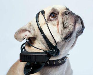 Mi mejor amigo: Mi perro: What does my dog think?