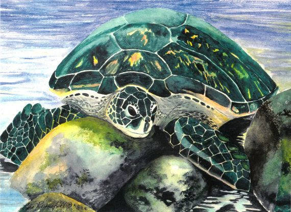 Sea Life Watercolor Turtle Sun Bathing Print by lisaschulaner, $25.00