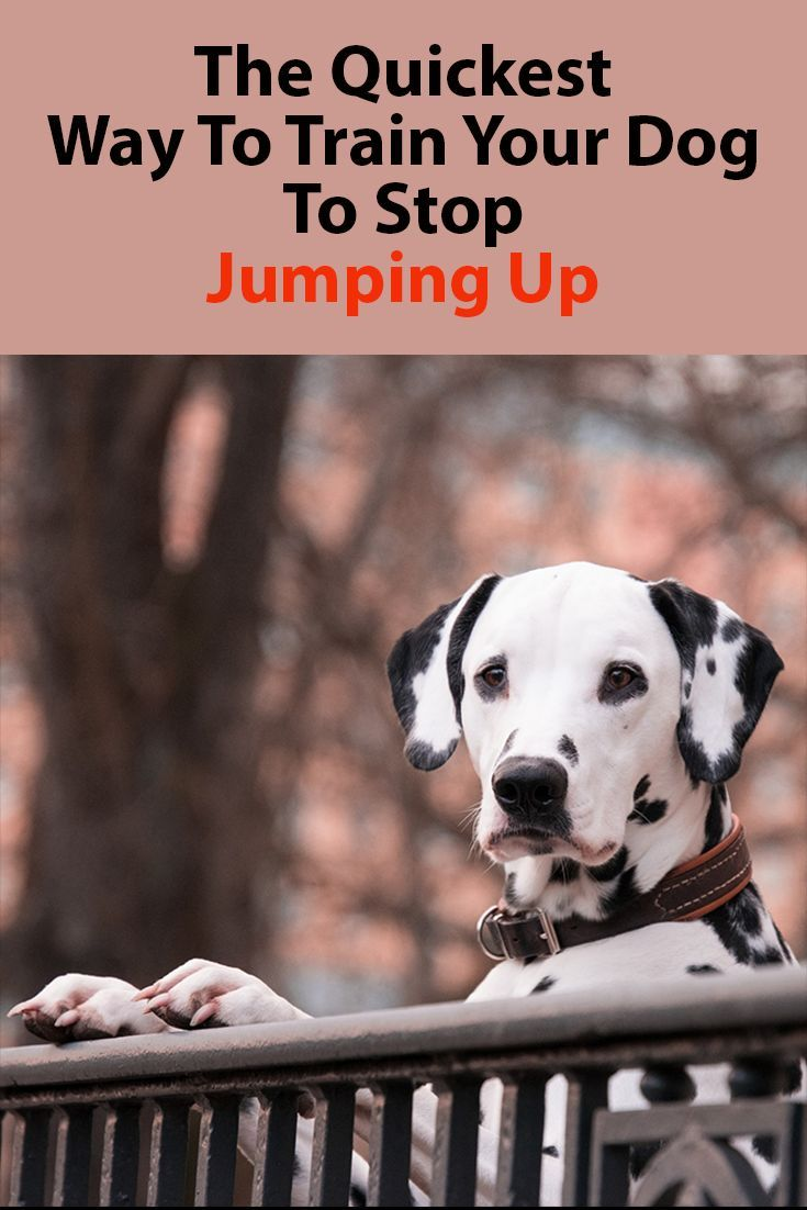 Stop Your Dog From Jumping Up Dog Training Training Your Dog