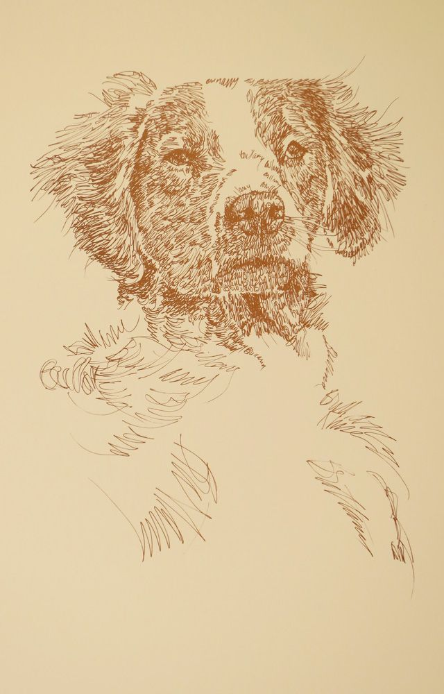 Brittany Spaniel: Dog Art Portrait by Stephen Kline - art drawn entirely from the words Brittany Spaniel. drawdogs.com http://drawdogs.com/product/dog-art/brittany-spaniel-dog-portrait-by-stephen-kline/ His collectors number in the thousands from over 20 countries and every state in the US. Kline's dog art has generated tens of thousands of dollars for dog rescues worldwide.