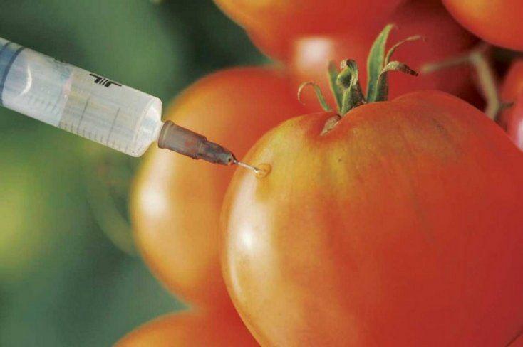 alimento transgenico