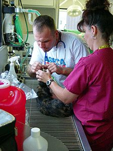 Low-Cost Veterinary Care #tx #low #cost #insurance http://trinidad-and-tobago.nef2.com/low-cost-veterinary-care-tx-low-cost-insurance/  # Veterinary staff examine a cat at a ASPCA Mobile Spay/Neuter Clinic. Photo by Meredith Weiss Low-Cost Veterinary Care If you need financial assistance to help pay for veterinary care for your companion animals in the New York City area, there are programs available that can make routine care or emergency treatment more affordable. Ask your veterinarian if…