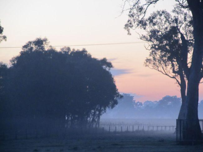 Mist and sunrise, Penola SA