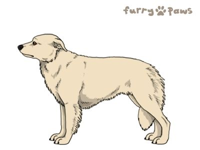 Furry Paws // WCH Kip's Rare Pattern [3STM 19HH 1.572] 6.3 *BoB*'s Kennel