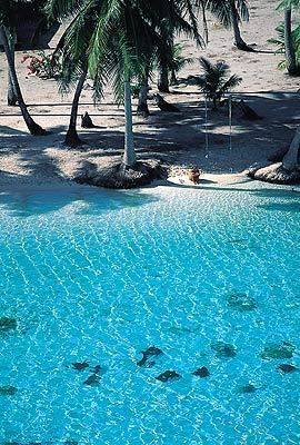 ✮ Fiji - That looks pretty perfect! Think I'll have to go visit next time I head to NZ...