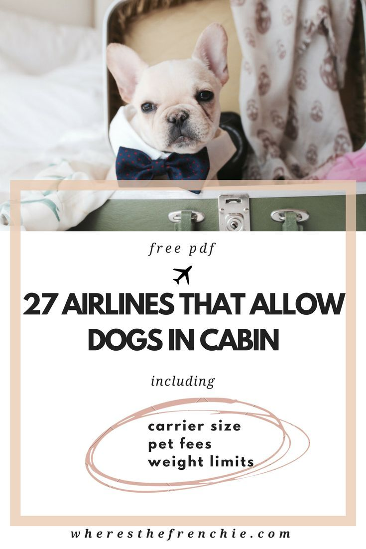 The Most Comprehensive List Of 27 Dog Friendly Airlines That Allow Dogs In Cabin Including Their Pet Fees Weight Limits Carr Dogs Dogs On Planes Pet Travel