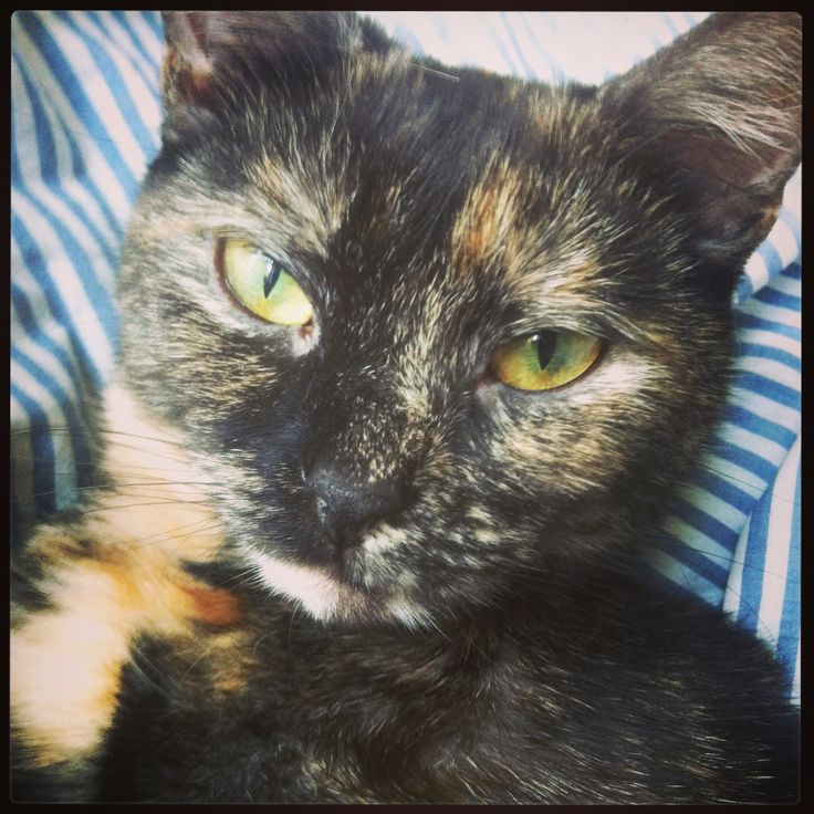 Green eyed Alba