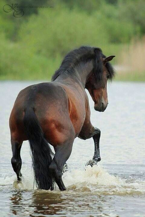 Gorgeous Andalusian getting some water time.