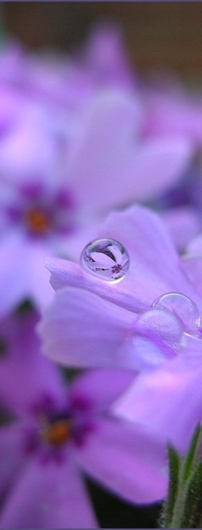Dew Drop In For A Colorful Pin , Or Plenty :) Welcome ~ Enjoy