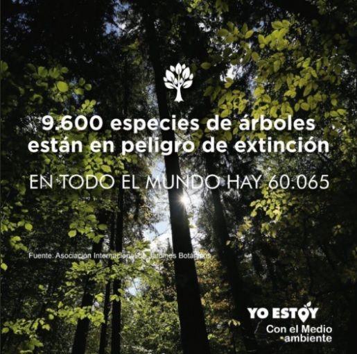 Casi 10.000 especies de árboles están en peligro de extinción por la deforestación y la sobreexplotación.