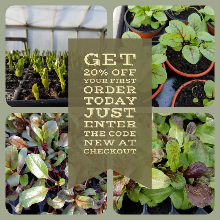 Get 20% Off your first order today at http://www.vegetableplantsdirect.co.uk/