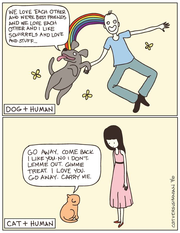 Cat vs Human by Yasmine the comic says it all!