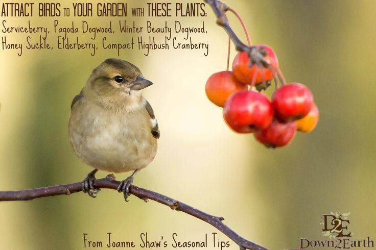 Gardening can be for the birds!  http://www.down2earth.ca/gardening-can-be-for-the-birds/