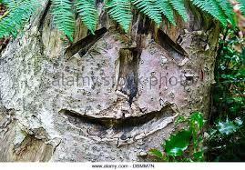 Image result for carved tree fern trunk
