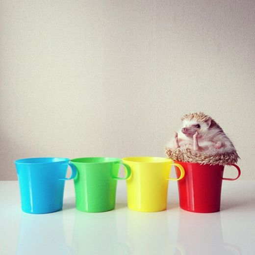 Darcy the Flying Hedgehog // cups