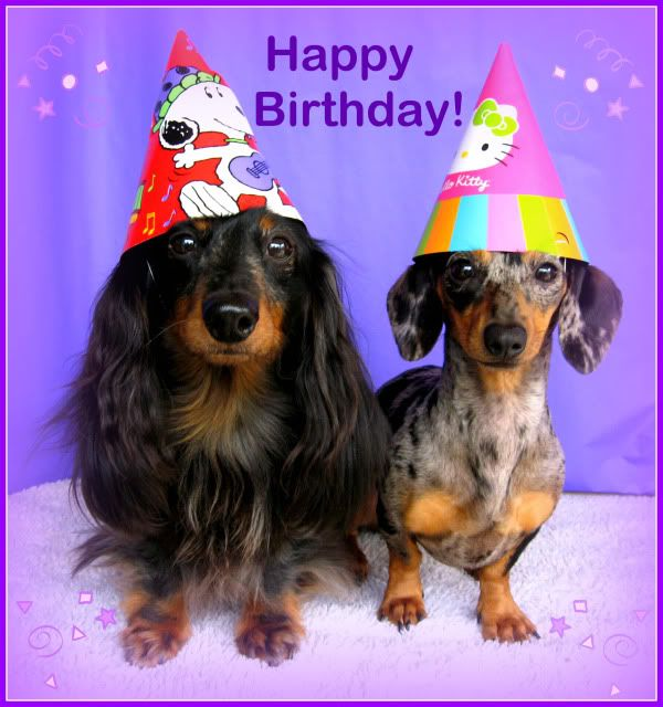 happy birthday images with dachshunds | Michelle & The Doxiefollies Villa including Gabriel, the Afghan Hound ...