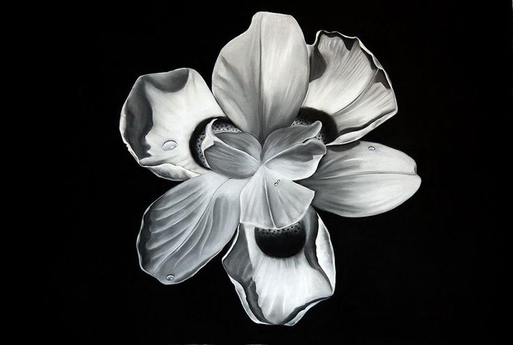 Flower Series III Drawing by Kendall-Leigh Nash  | StateoftheART