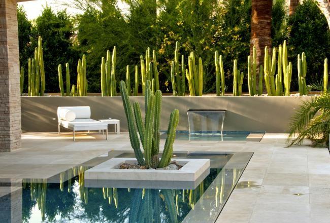 La piscine extérieure avec des cactus verts