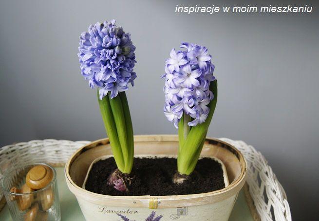inspiracje w moim mieszkaniu: Wiosna w salonie