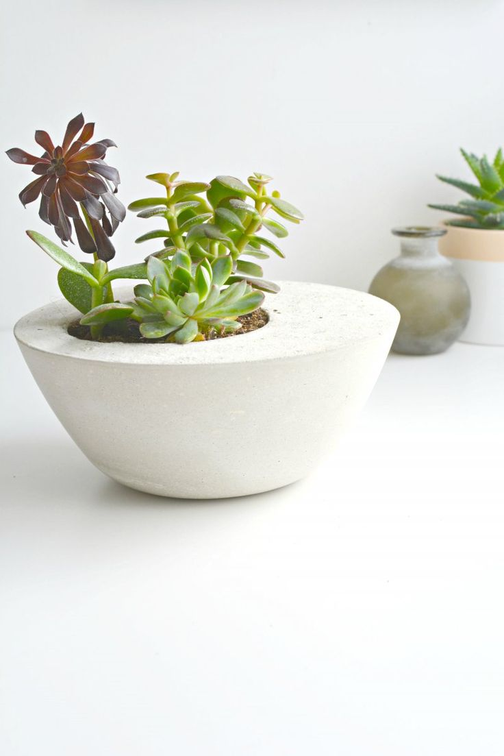 Best 25+ Concrete pots ideas on Pinterest | Concrete planters ...