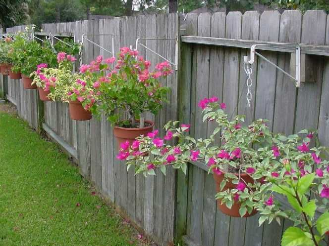Landscaping Along Fence Line | One Way To Display Bougainvillea Is In  Hanging Pots Along A
