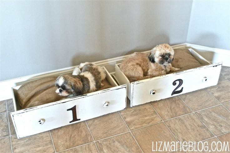 DIY Dog beds made from drawers..LOVE this idea! I wonder if the thrift store would be hip to the idea of me buying only a drawer