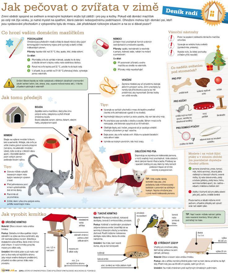 Deník radí –zvířata v zimě / Animals in winter