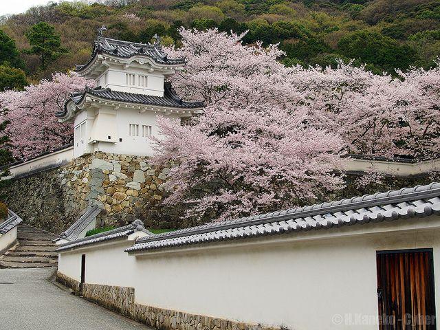 龍野城 (Tatsuno Castle in spring)
